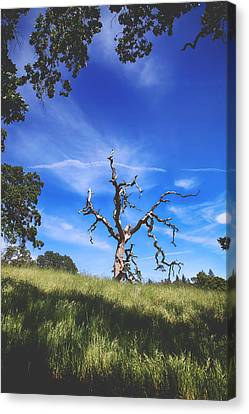 A Life Well Lived Canvas Print by Laurie Search