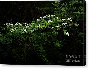 Canvas Print featuring the photograph A Light In The Darkness by Skip Willits