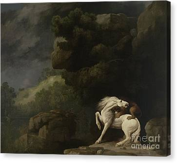 A Lion Attacking A Horse, 1770 Canvas Print by George Stubbs