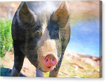 A Little Bit Snooty Canvas Print by Donna Kennedy
