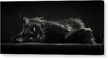 A Little Bit Tired Canvas Print by Robert Sijka