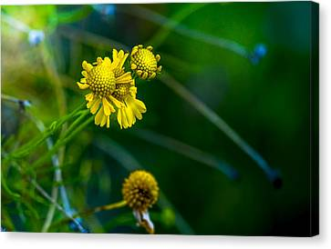 A Little Cheerfulness Canvas Print by Marvin Spates