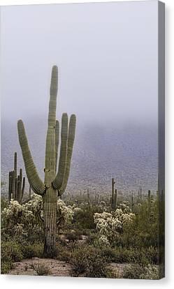A Little Desert Fog  Canvas Print by Saija Lehtonen