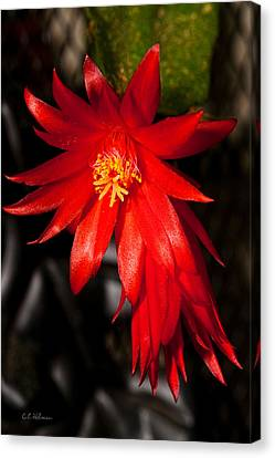 A Little Fire Canvas Print by Christopher Holmes