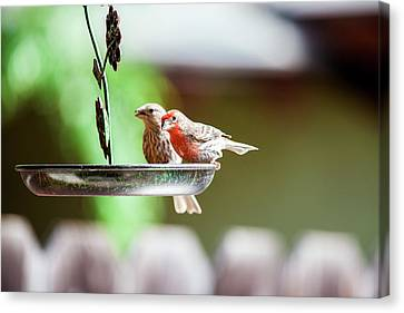 Canvas Print featuring the photograph A Little Lunch by Wade Courtney