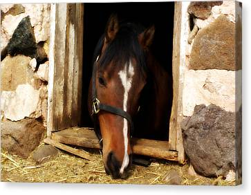 A Little Nibble Canvas Print by Linda Mishler