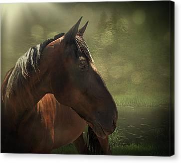 Bay Horse Canvas Print - A Little Rnr by Davandra Cribbie