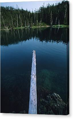 A Log Juts Out Over A Lake Canvas Print by Bill Hatcher