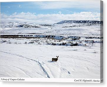 Canvas Print featuring the photograph A Lone Buck Deer In Carbon County, Wyoming by Carol M Highsmith