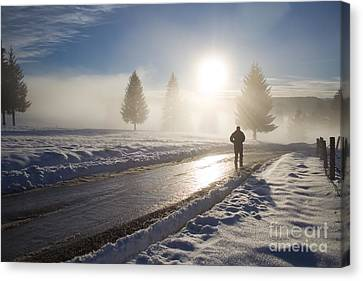 A Lonely Winter Canvas Print by Gabriela Insuratelu
