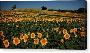 Canvas Print featuring the photograph A Lot Of Birdseed  by Chris Berry