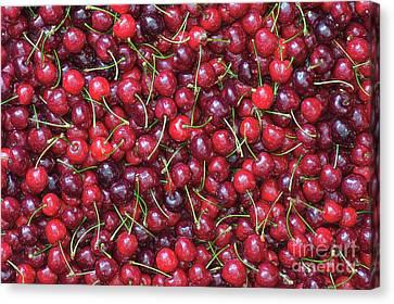 A Lotta Cherries Canvas Print by Tim Gainey