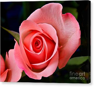 A Loving Rose Canvas Print by Sean Griffin