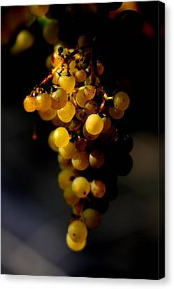 A Luscious Bunch Of Grapes Canvas Print by Ian Sanders