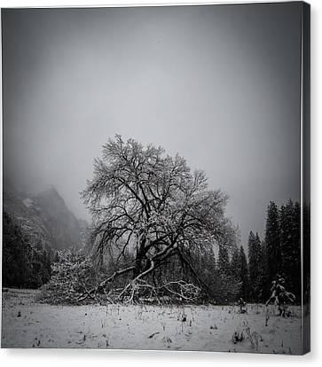 A Magic Tree Canvas Print by Lora Lee Chapman