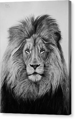 A Majestic Stare Canvas Print