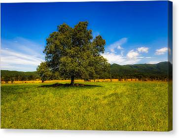 Tennessee Historic Site Canvas Print - A Majestic White Oak Tree In Cades Cove - 1 by Frank J Benz