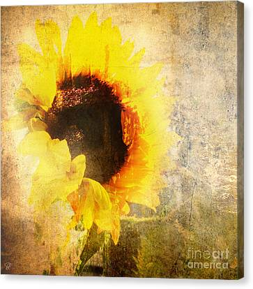 Canvas Print featuring the photograph A Memory Of Summer by LemonArt Photography
