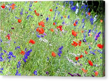 4th July Canvas Print - A Merrie Medley In Wildflowers by Pamela Williams