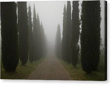 A Morning Mist Makes Its Way Canvas Print by Joel Sartore