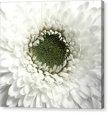 Endless Petals Canvas Print