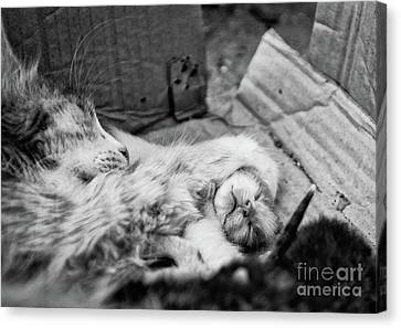 A Mother's Paw Canvas Print by Dean Harte