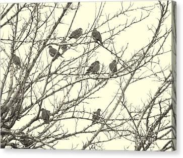 A Mourning Of Doves Canvas Print by Joe Jake Pratt