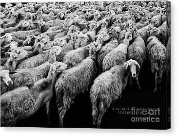 A Nation Of Sheep Canvas Print