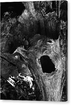 A Natural Primordial Scream Canvas Print