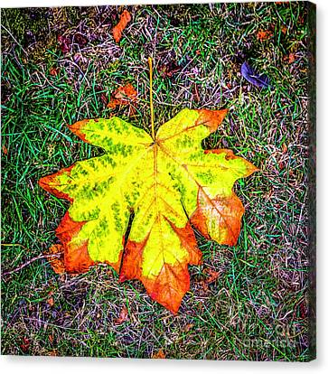 A New Leaf Canvas Print by Jon Burch Photography