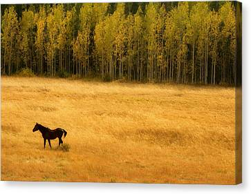 A Nice Autumn Day Canvas Print by James BO  Insogna