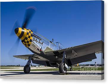 A P-51 Mustang At Waukegan, Illinois Canvas Print by Rob Edgcumbe