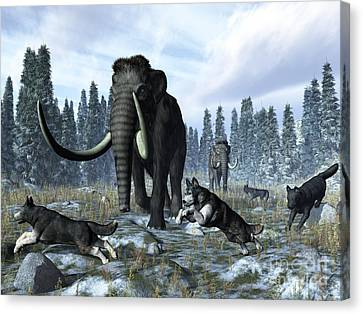 A Pack Of Dire Wolves Crosses Paths Canvas Print by Walter Myers