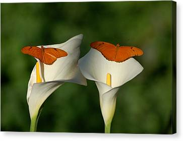 A Pair Of Butterflies Land Upon A Pair Of Lilies Canvas Print by Susan Heller
