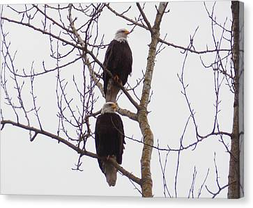 A Pair Of Eagles Canvas Print