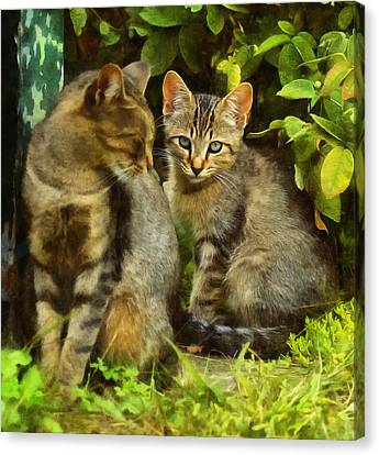 A Pair Of Feral Cats Canvas Print