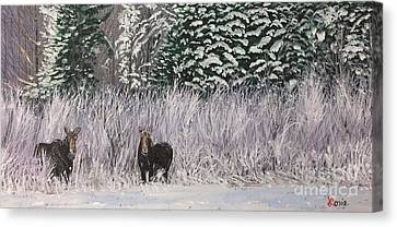A Pair Of Moose Canvas Print by Lorie Smith