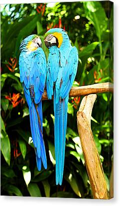 A Pair Of Parrots Canvas Print by Marilyn Hunt