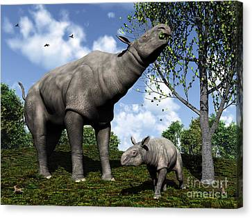 Feeding Canvas Print - A Paraceratherium Mother Grazes by Walter Myers