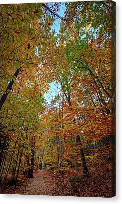 A Path Diverged In The Woods Canvas Print by Rick Berk
