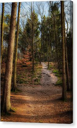 A Path Through The Woods Canvas Print by Tim Abeln
