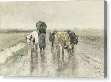 A Peasant Woman With Cows On A Country Lane In The Rain Canvas Print by Anton Mauve