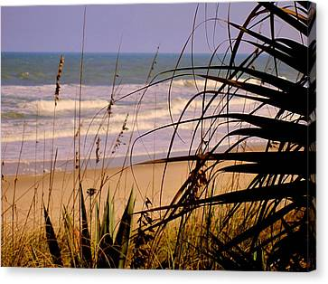 A Peek At The Shore Canvas Print by Susanne Van Hulst