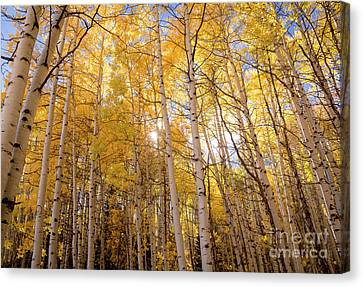 Canvas Print featuring the photograph A Perfect Day Begins by The Forests Edge Photography - Diane Sandoval