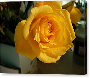 A Perfect Yellow Rose Canvas Print