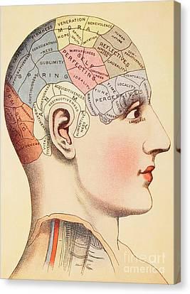 A Phrenological Map Of The Human Brain Canvas Print