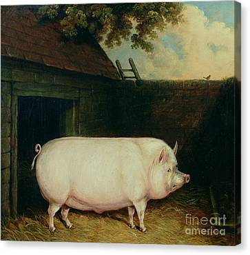 Fat Canvas Print - A Pig In Its Sty by E M Fox