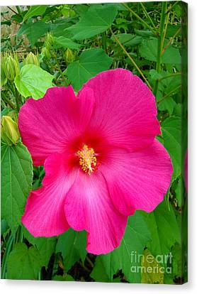 Canvas Print featuring the photograph A Pink That Pops by Sue Melvin