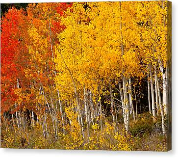 A Place In The Aspen Forest Canvas Print by Tim Reaves