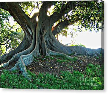 A Poem As Lovely As A Tree Canvas Print
